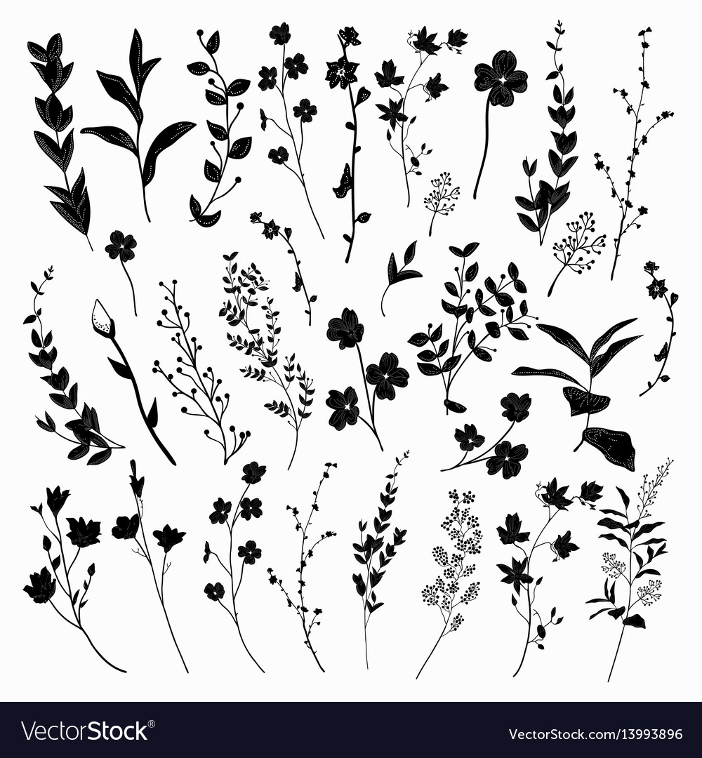 Black drawn herbs plants and flowers
