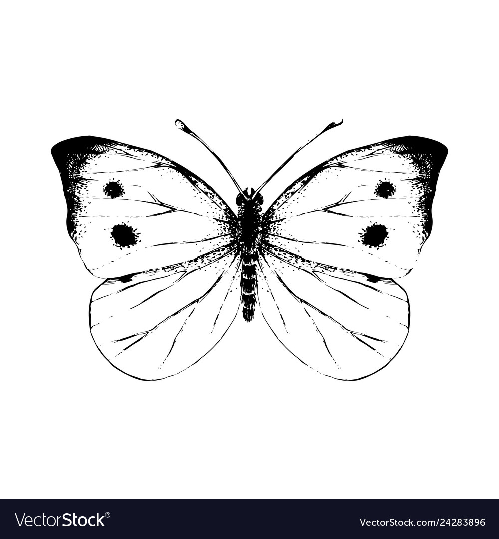 Hand drawn small white butterfly