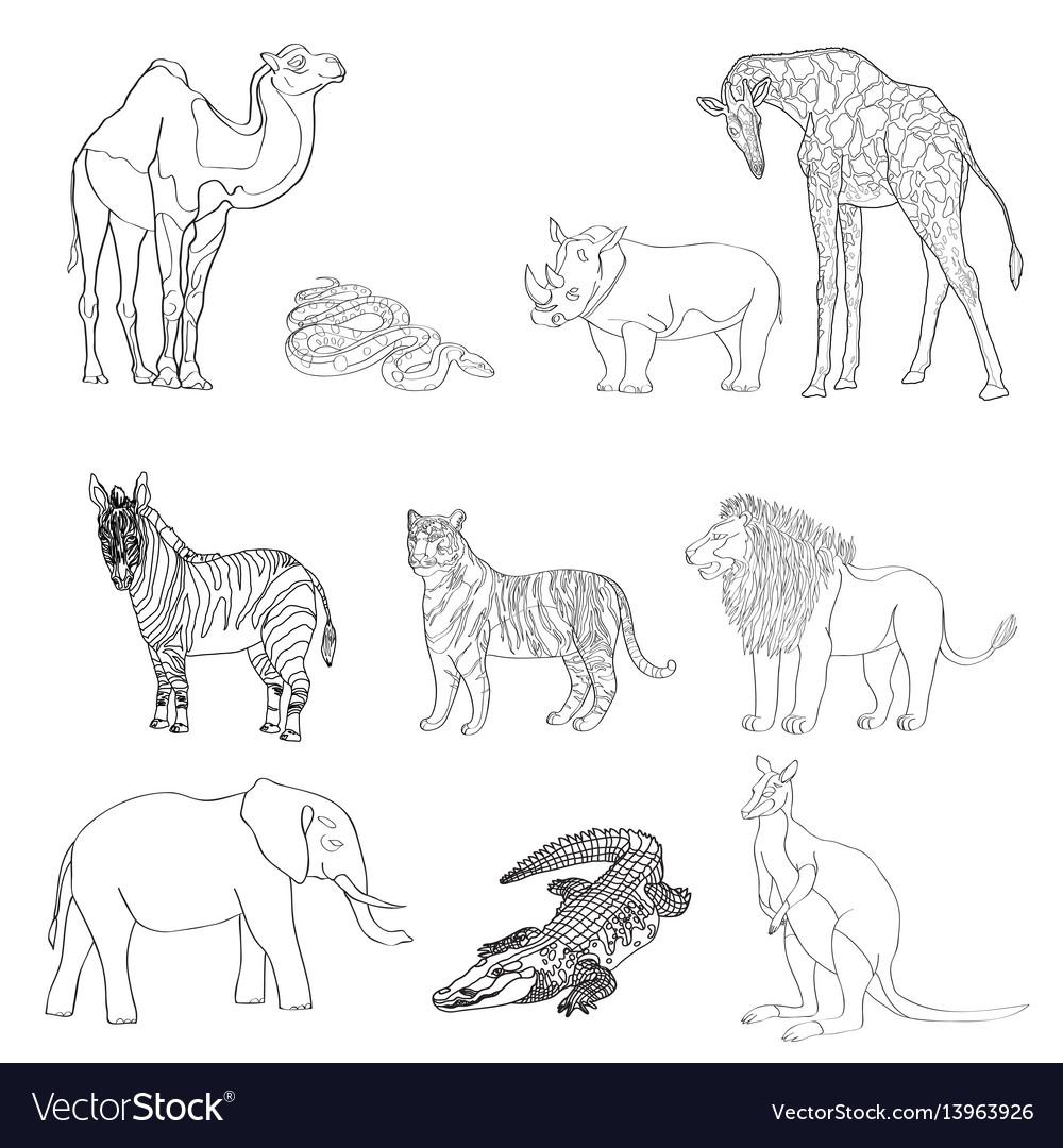 The image of animals animals