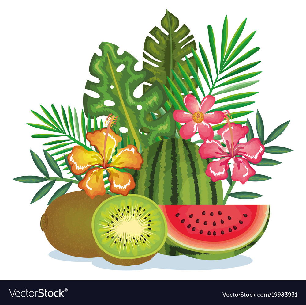 Tropical garden with kiwi and watermelon vector image