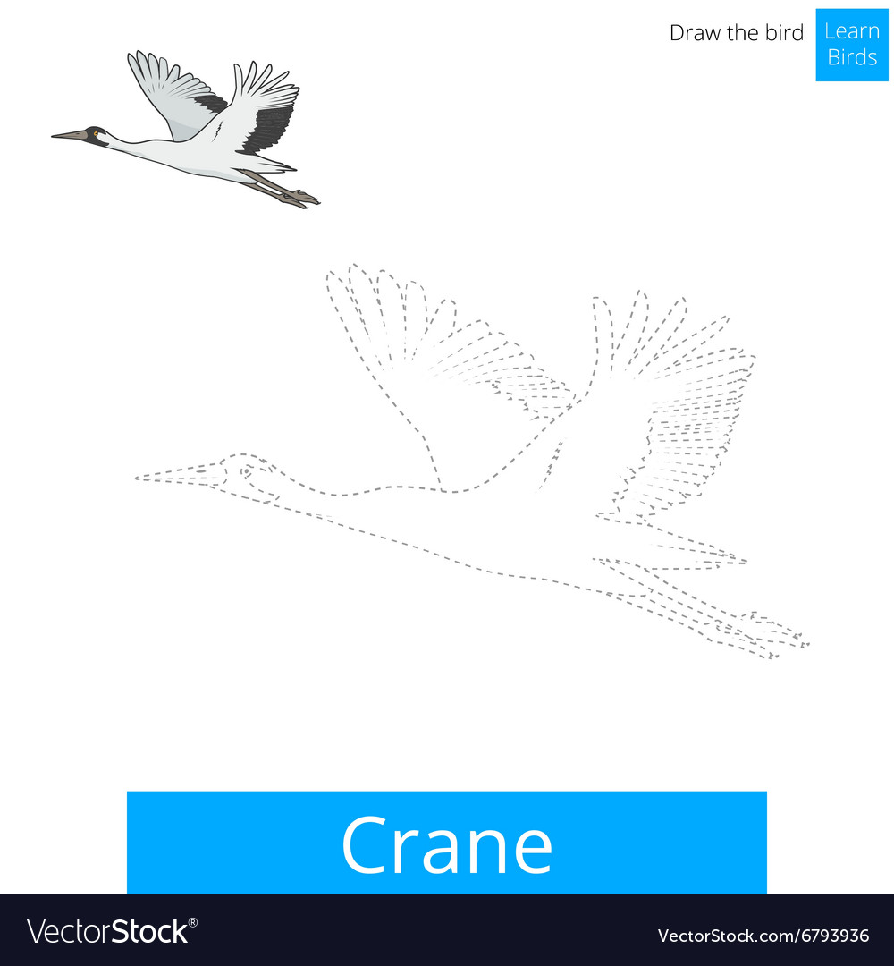Crane bird learn to draw