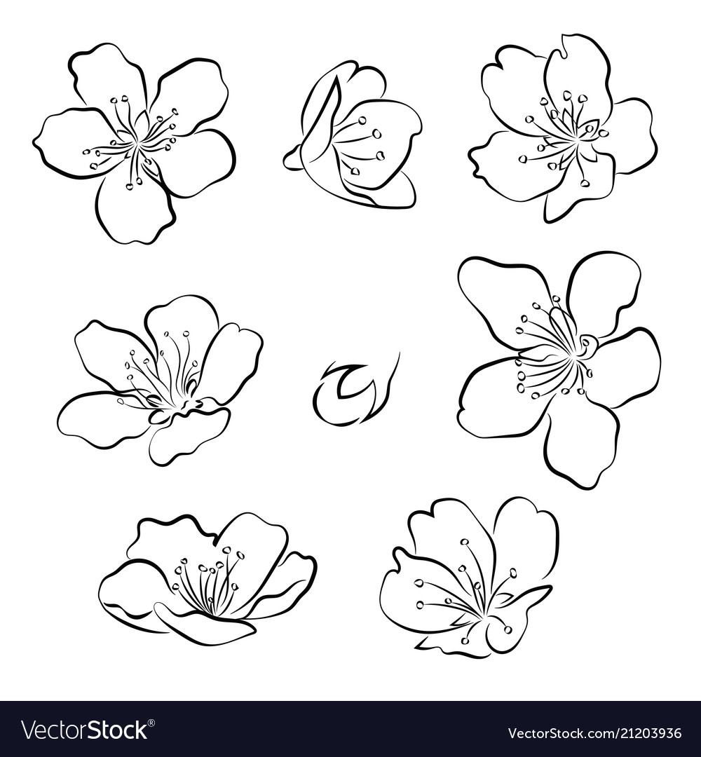 Set of cherry blossoms collection of flowers of