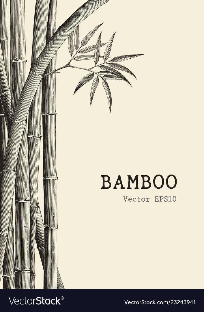Bamboo Background Hand Drawing Engraving Style Vector Image