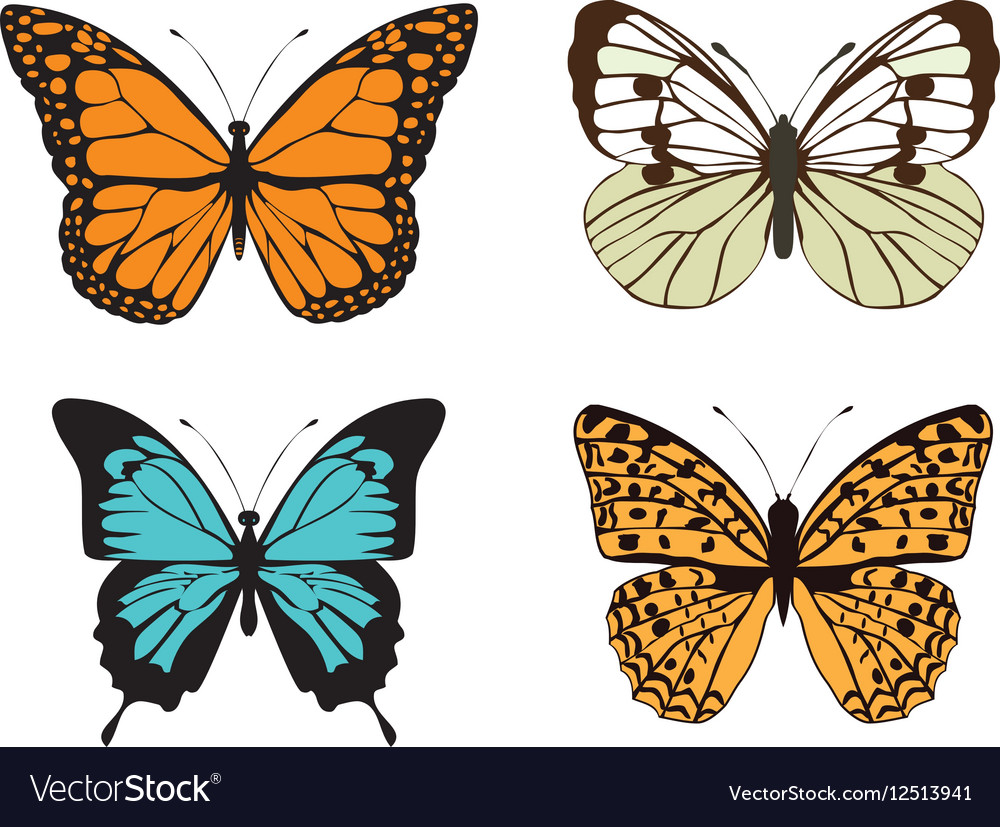 Butterfly Color Royalty Free Vector Image Vectorstock
