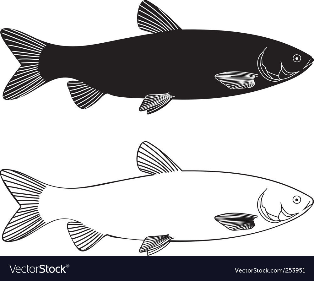Fish grass carp