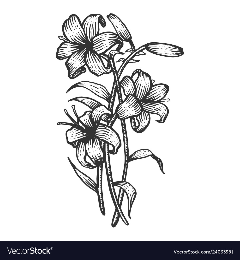 Lily flower sketch engraving