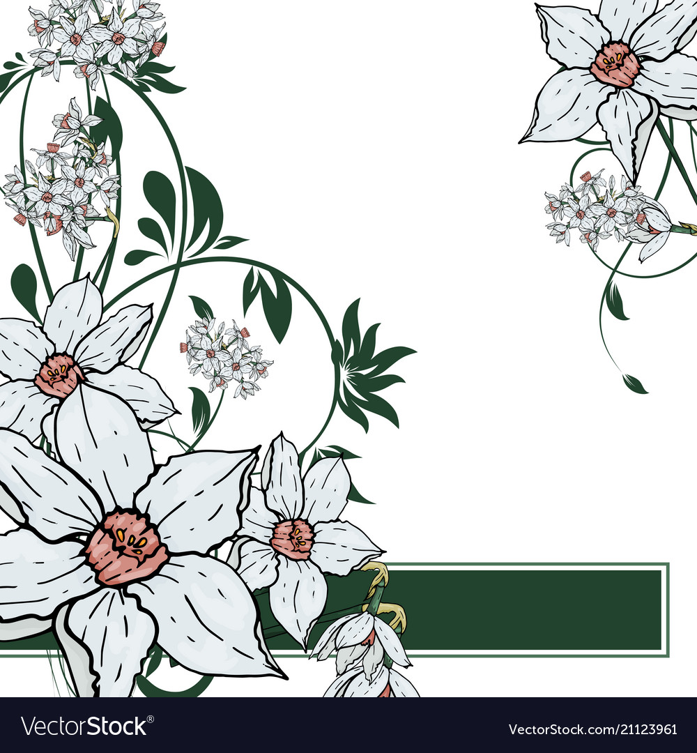 Hand drawing narcissus flowers background