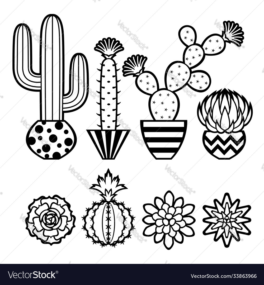 Collection cacti