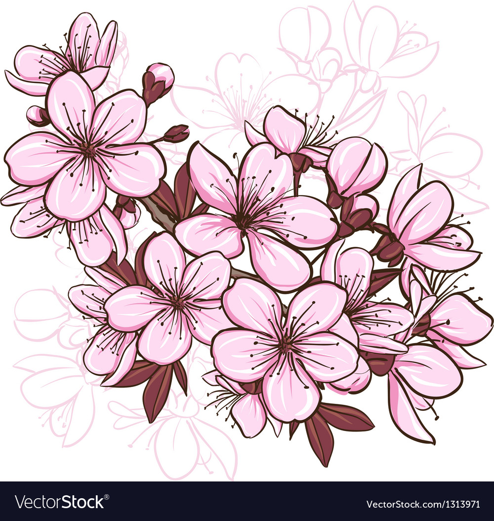 cherry blossom royalty free vector image vectorstock rh vectorstock com cherry blossom vector art cherry blossom vector black and white