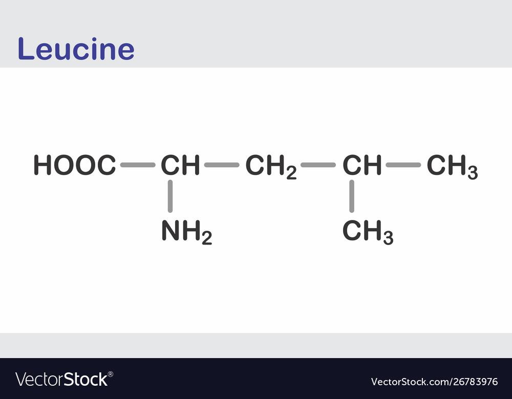 Leucine skeletal formula