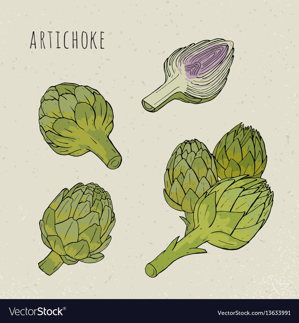Artichoke set hand drawn botanical isolated and