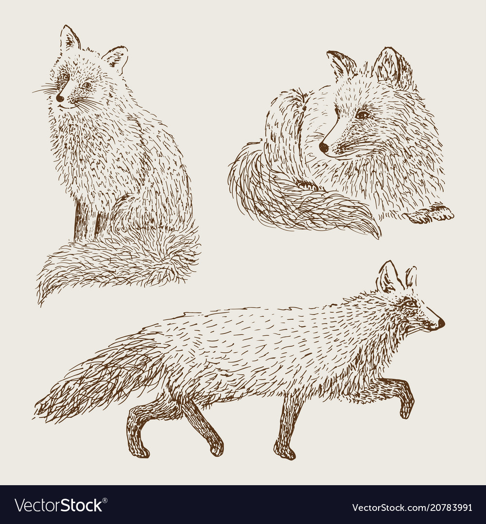 Fox sketch set hand drawn