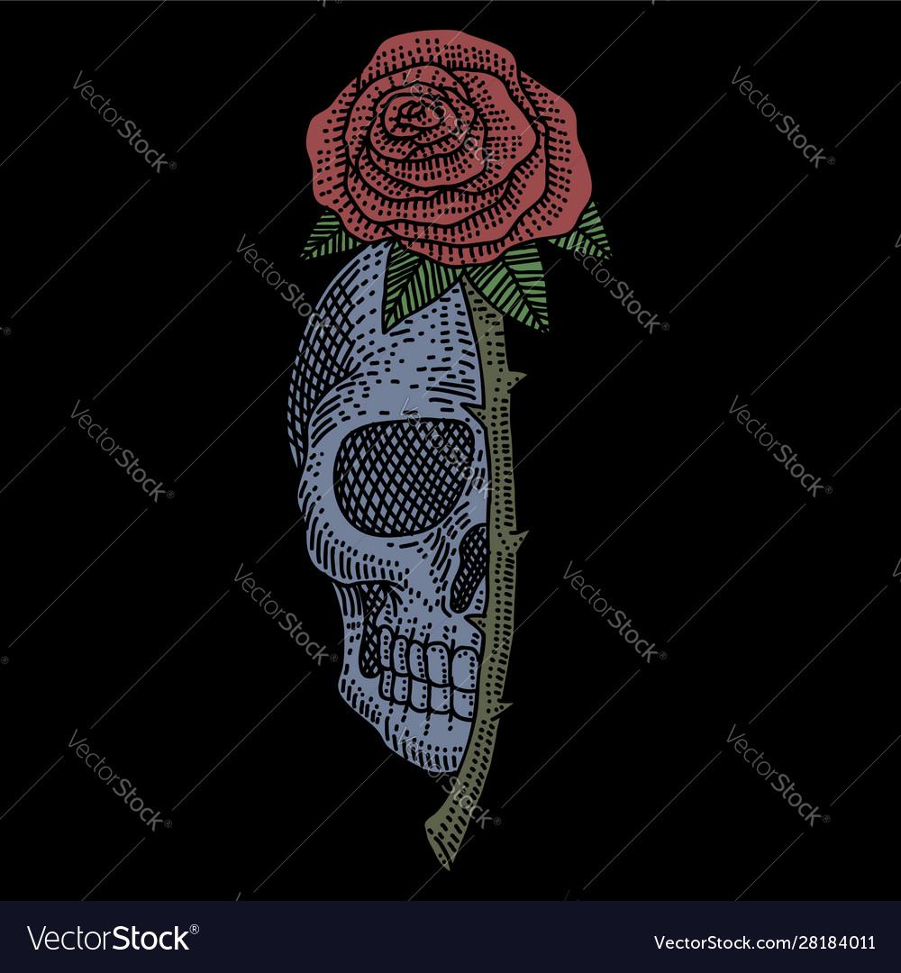 Skull rose vintage