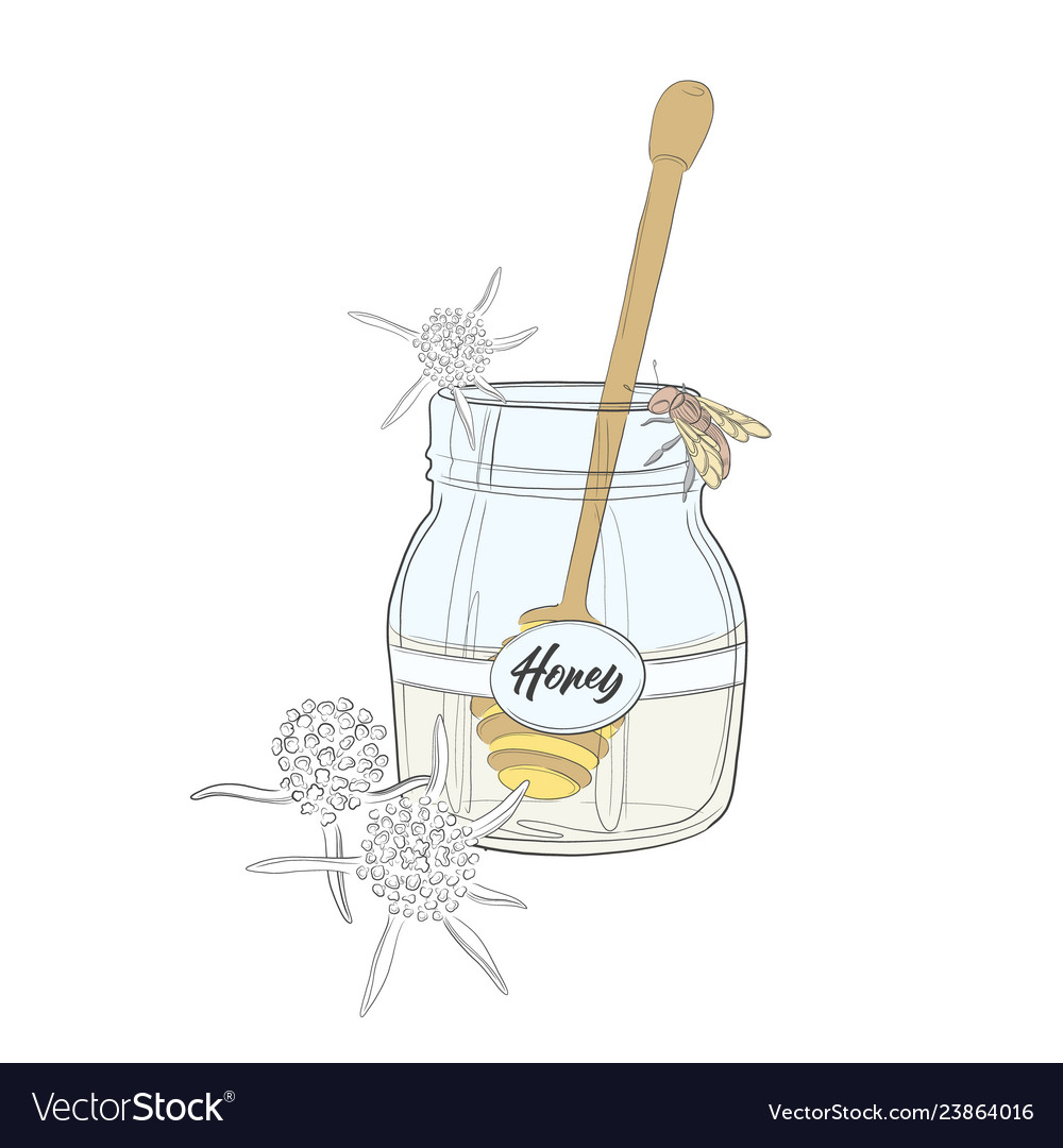 Nature cartoon honey and bee big jar