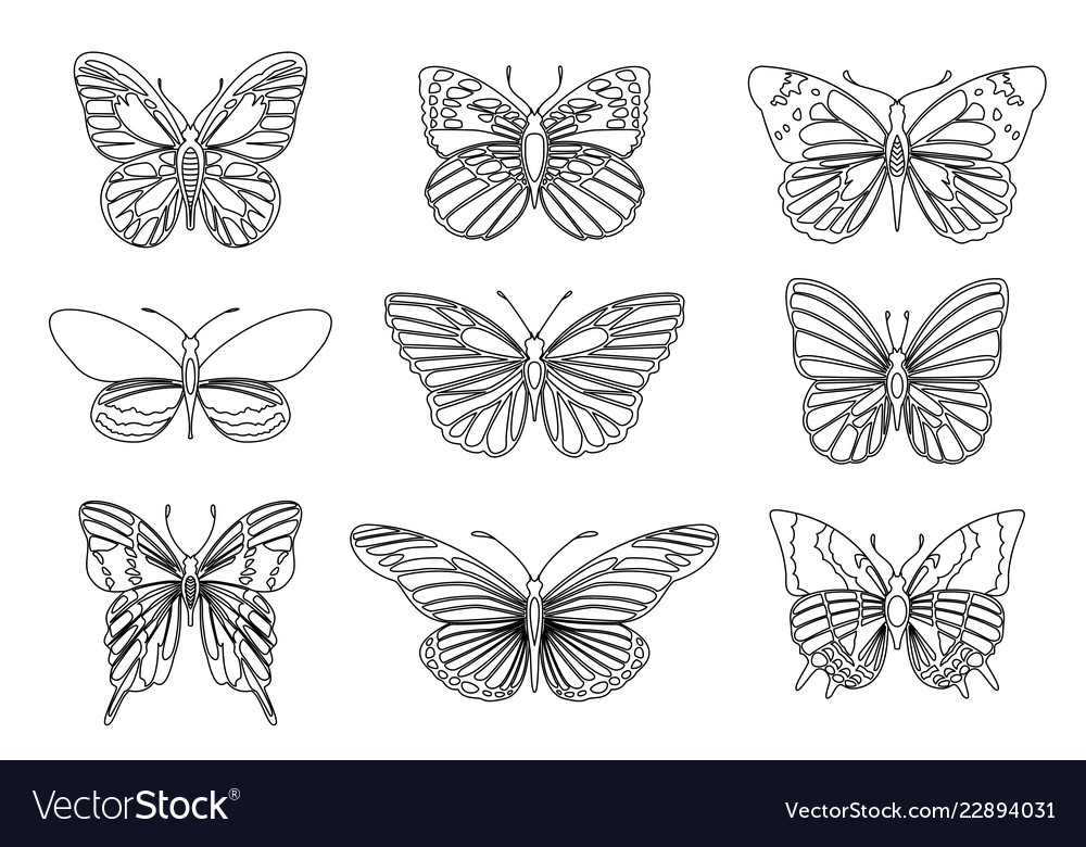 Set of butterflies for design element and adult or