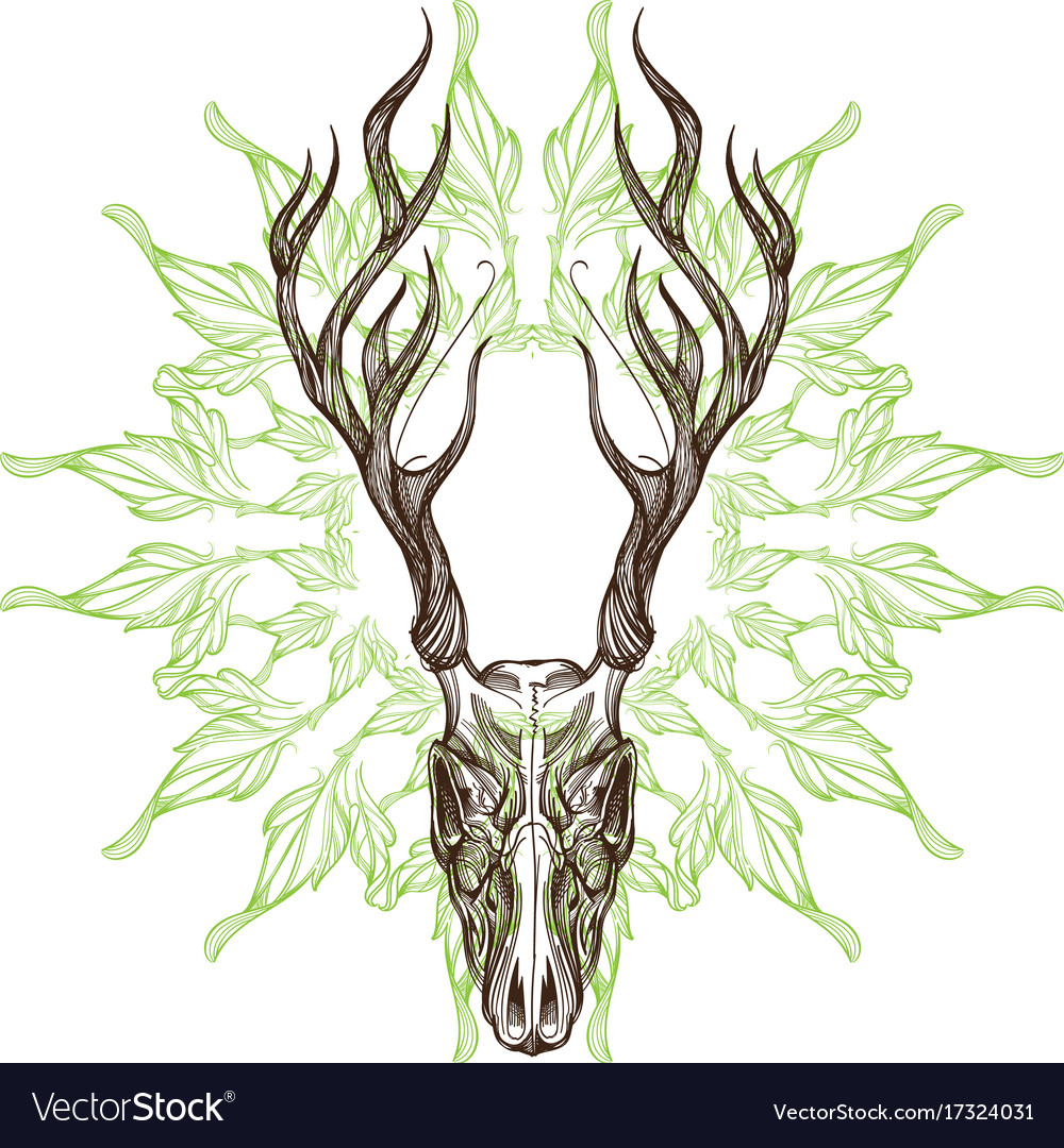 Sketch of deer skull with decorative floral vector image