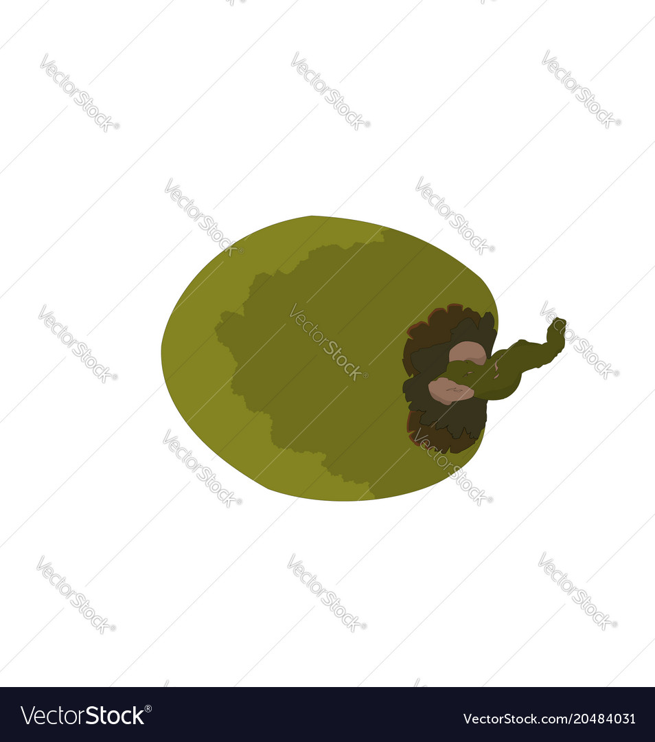 Tropical coconut fruit isolated