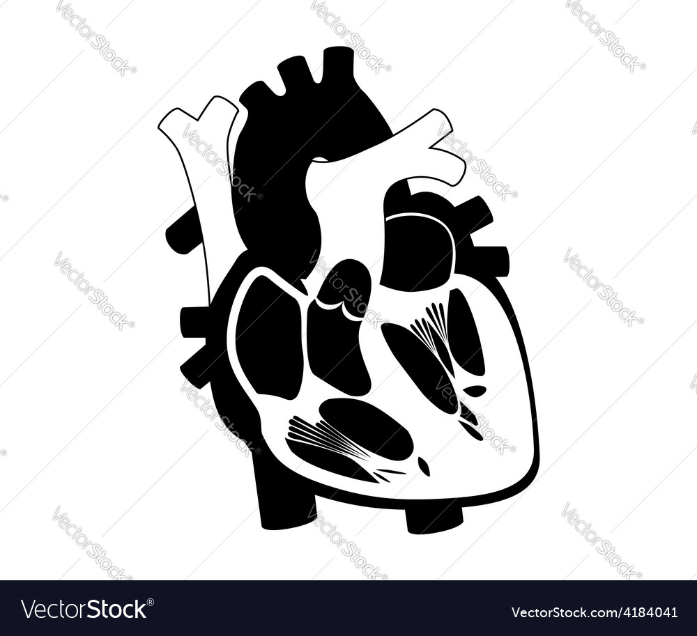 Function and definition human heart silhouette