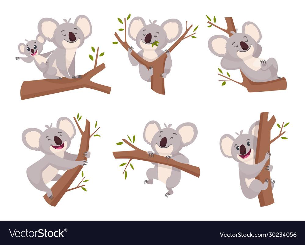 Koala bear wildlife cute furry animal from