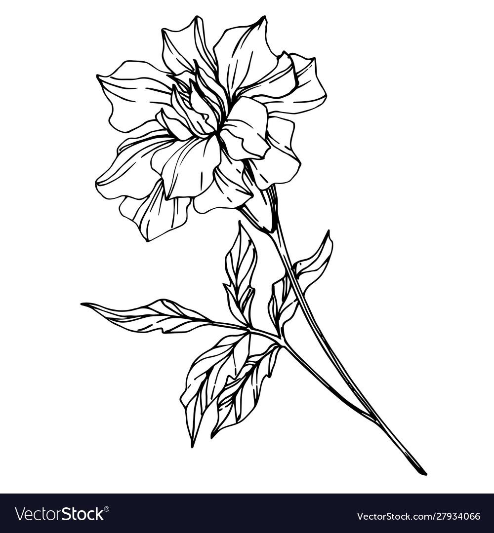 Marigold Floral Botanical Flowers Black Royalty Free Vector