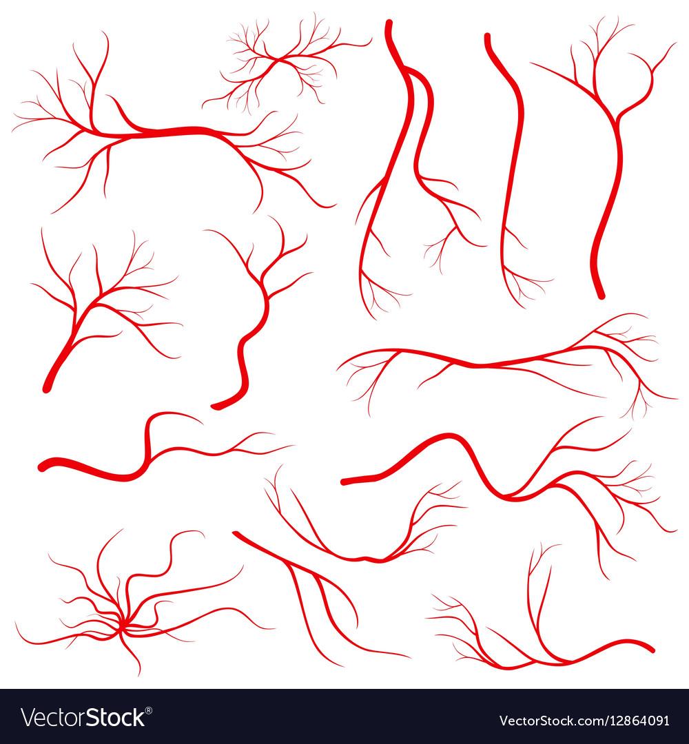 Human eye veins vessel blood arteries isolated vector image