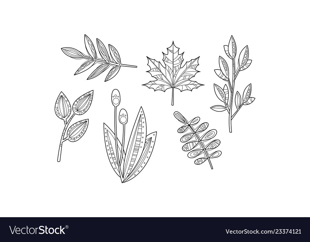 Collection of hand drawn plants monochrome