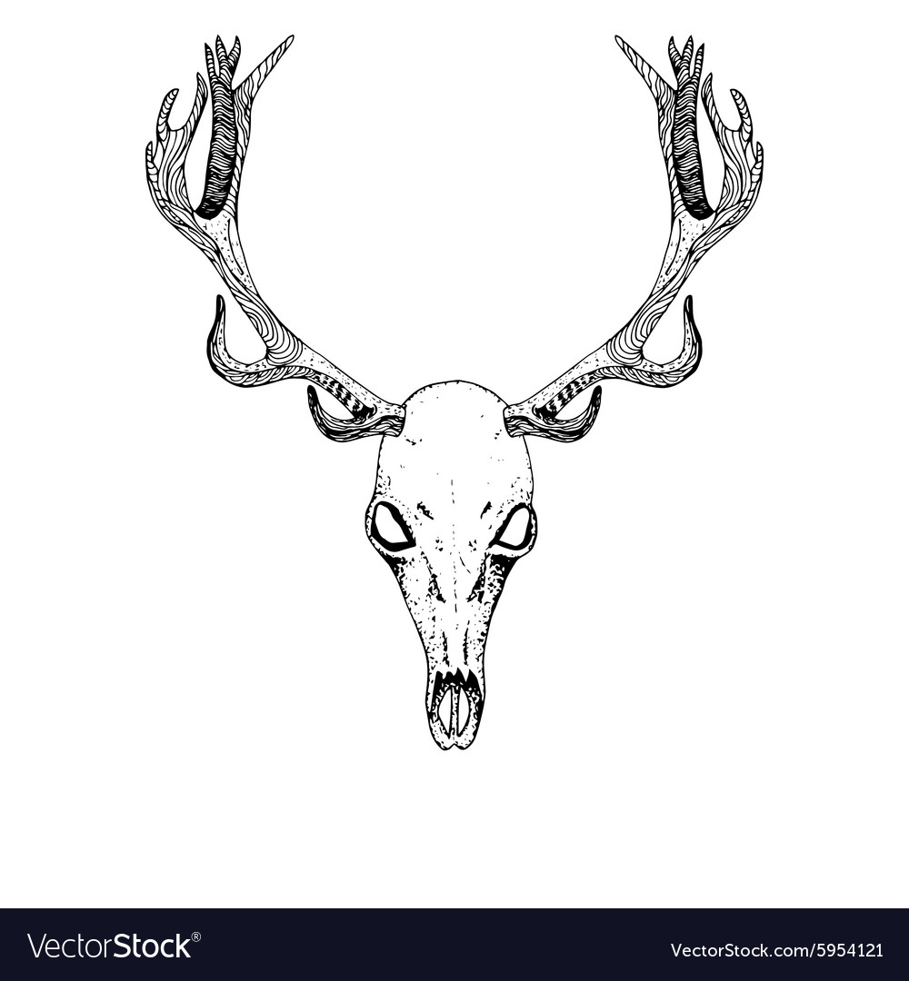Sketch Deer Skull vector image