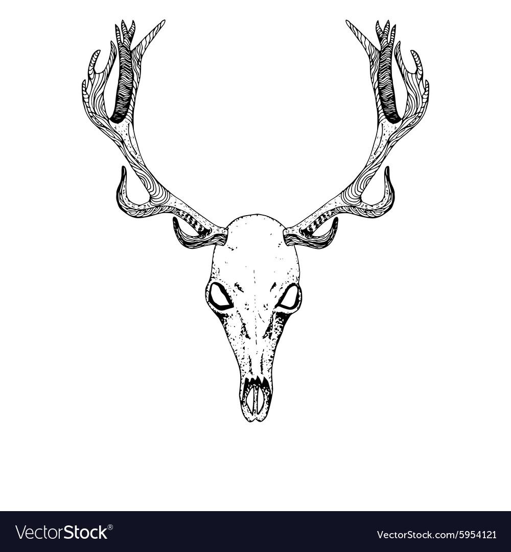 Sketch Deer Skull