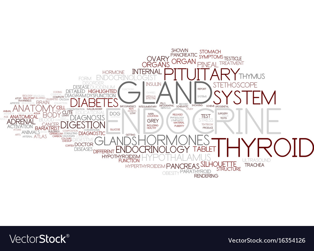Endocrine word cloud concept vector image