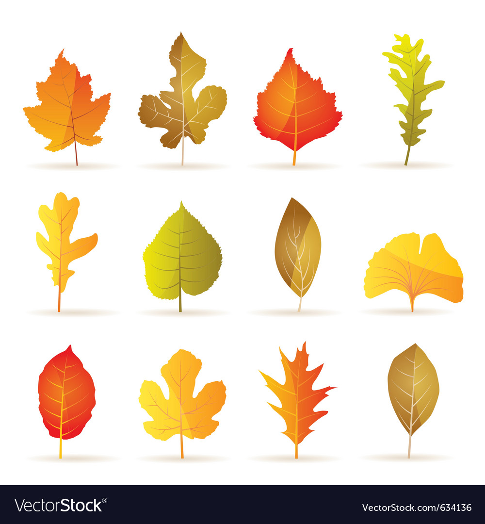 Different Kinds Of Tree Autumn Leaf Icons Vector Image