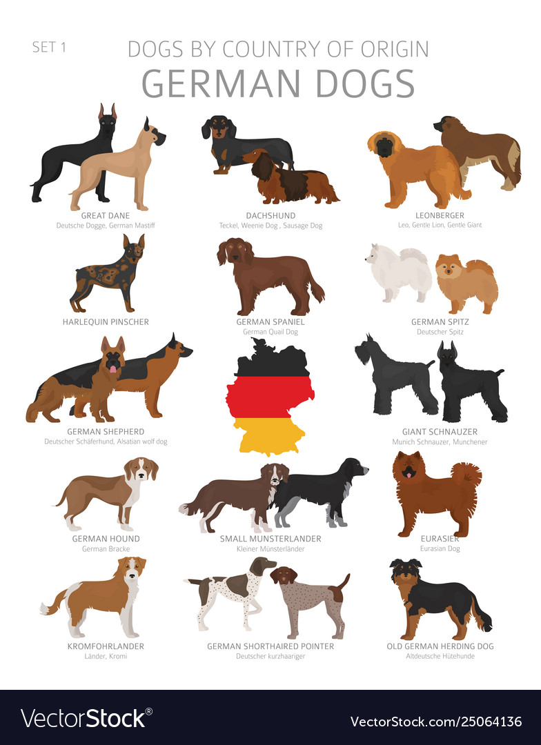Dogs country origin german dog breeds