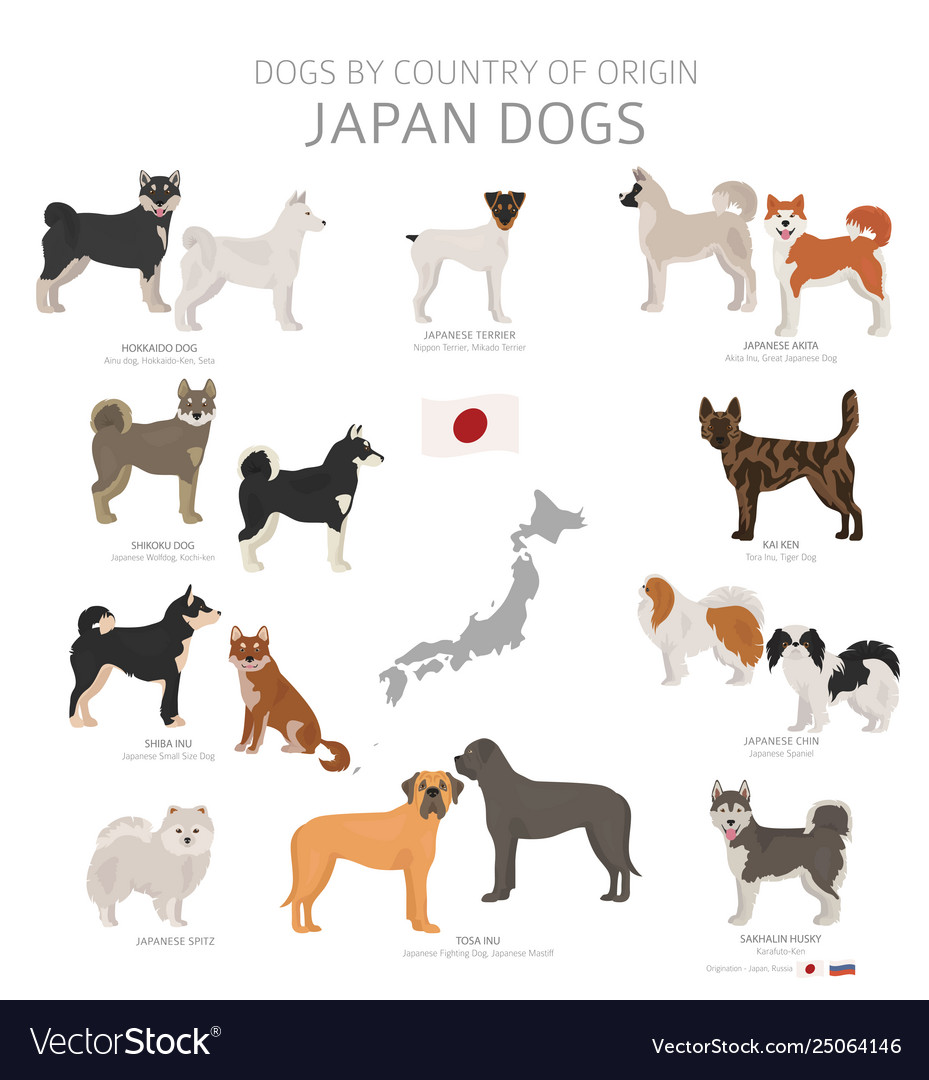 Dogs Country Origin Japanese Dog Breeds Royalty Free Vector