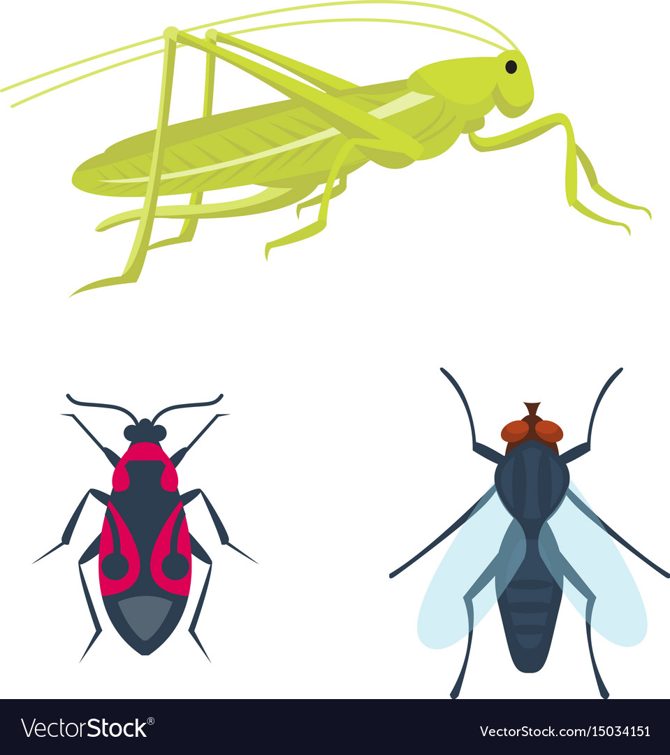 Colorful insects icons isolated wildlife wing