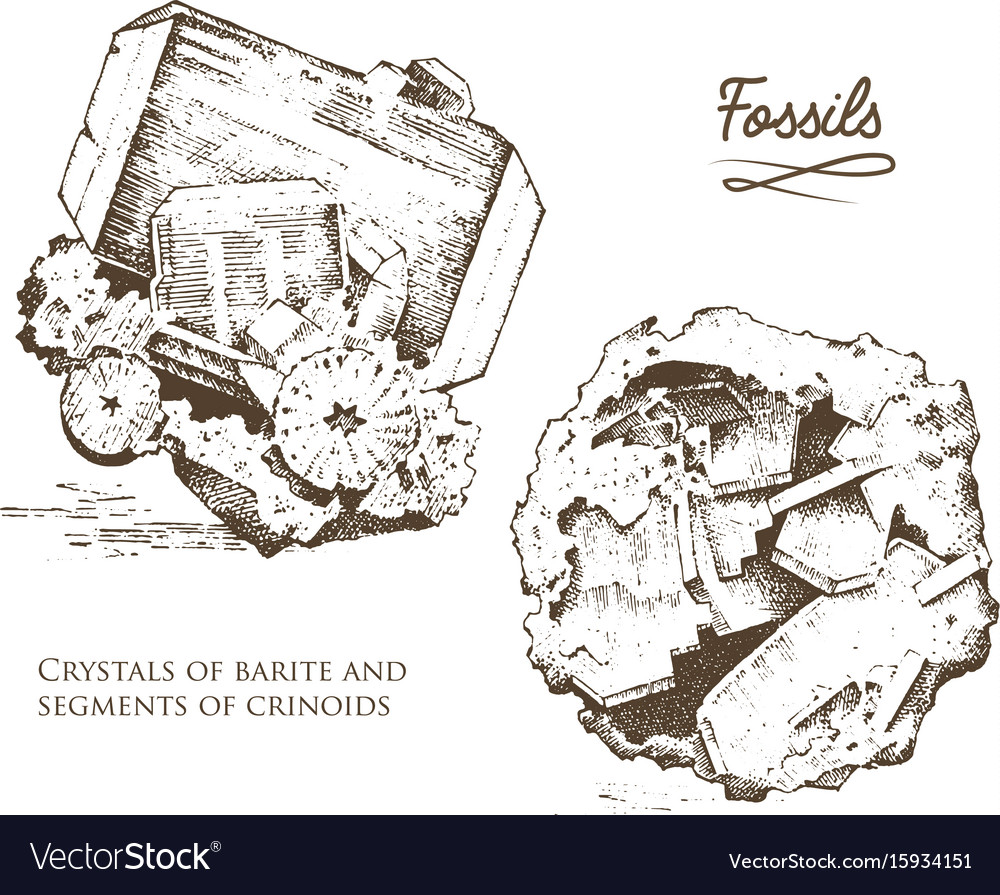 Fossilized plants stones and minerals crystals