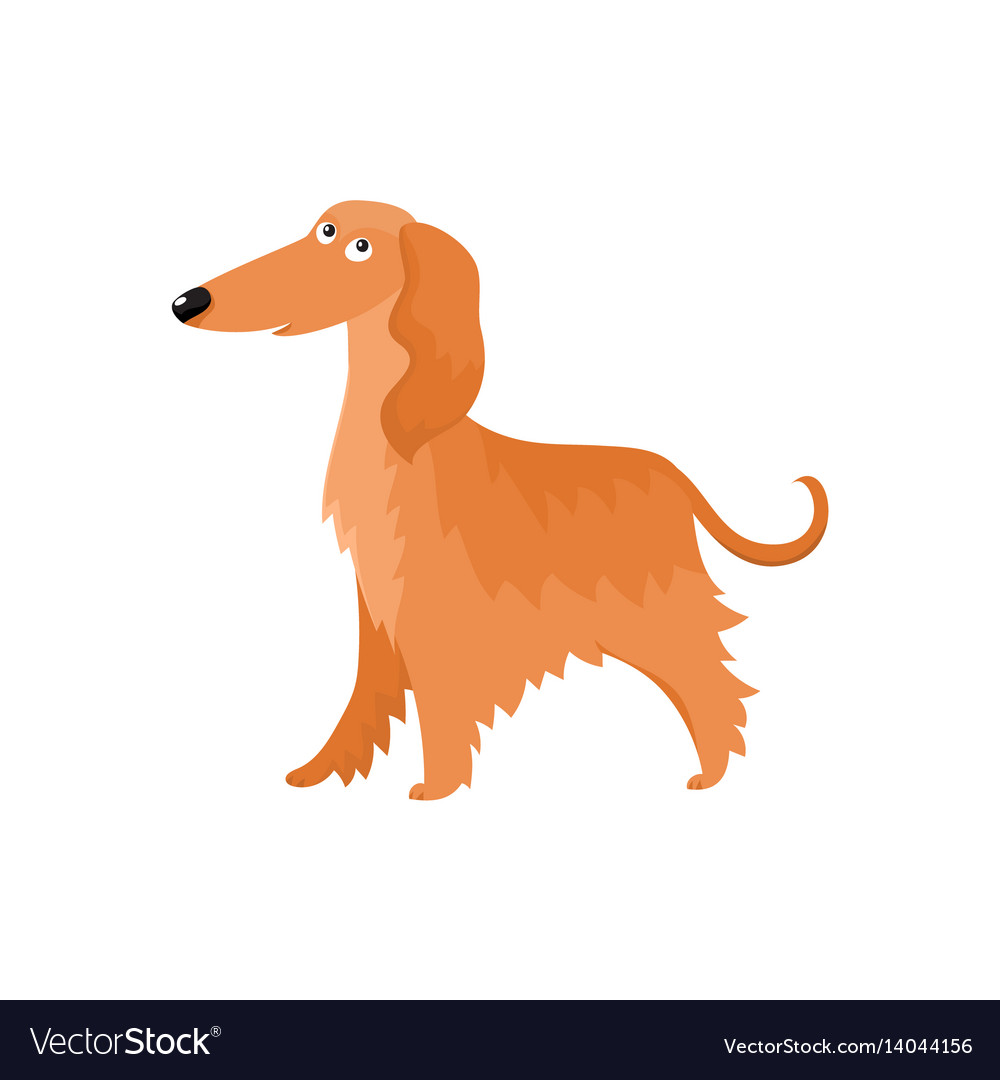 Cute long haired afghan hound dog character vector image