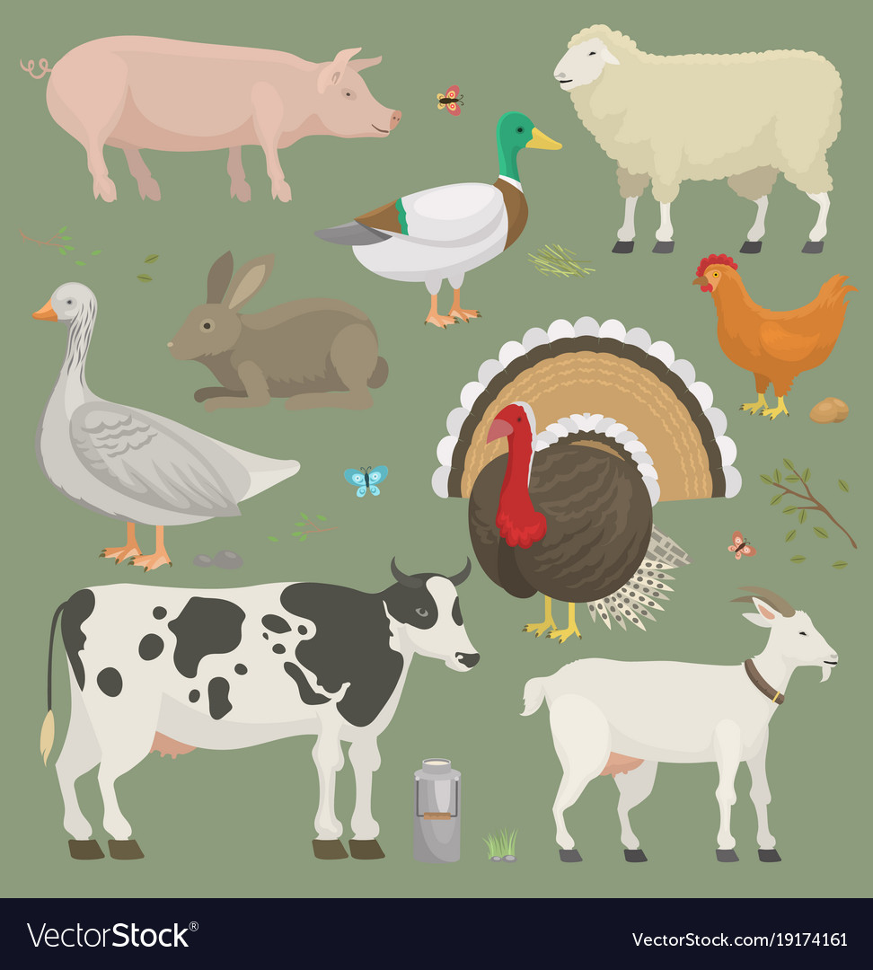 Different home farm animals and birds like