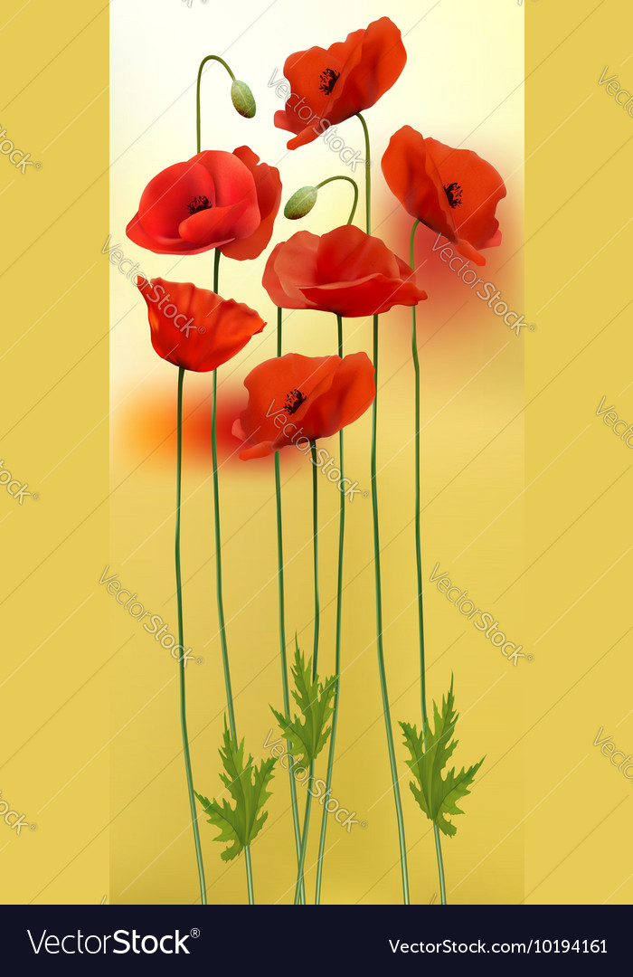 Nature background with red beauty poppies