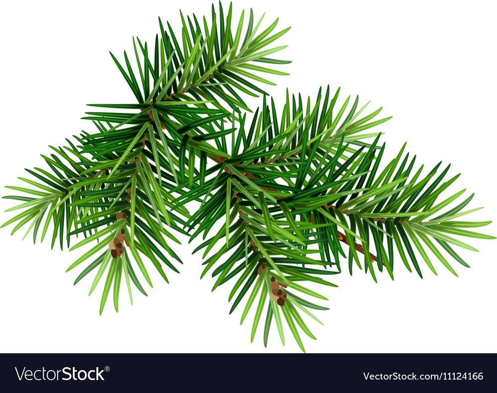 Christmas Branch Tree.Green Christmas Pine Tree Branch