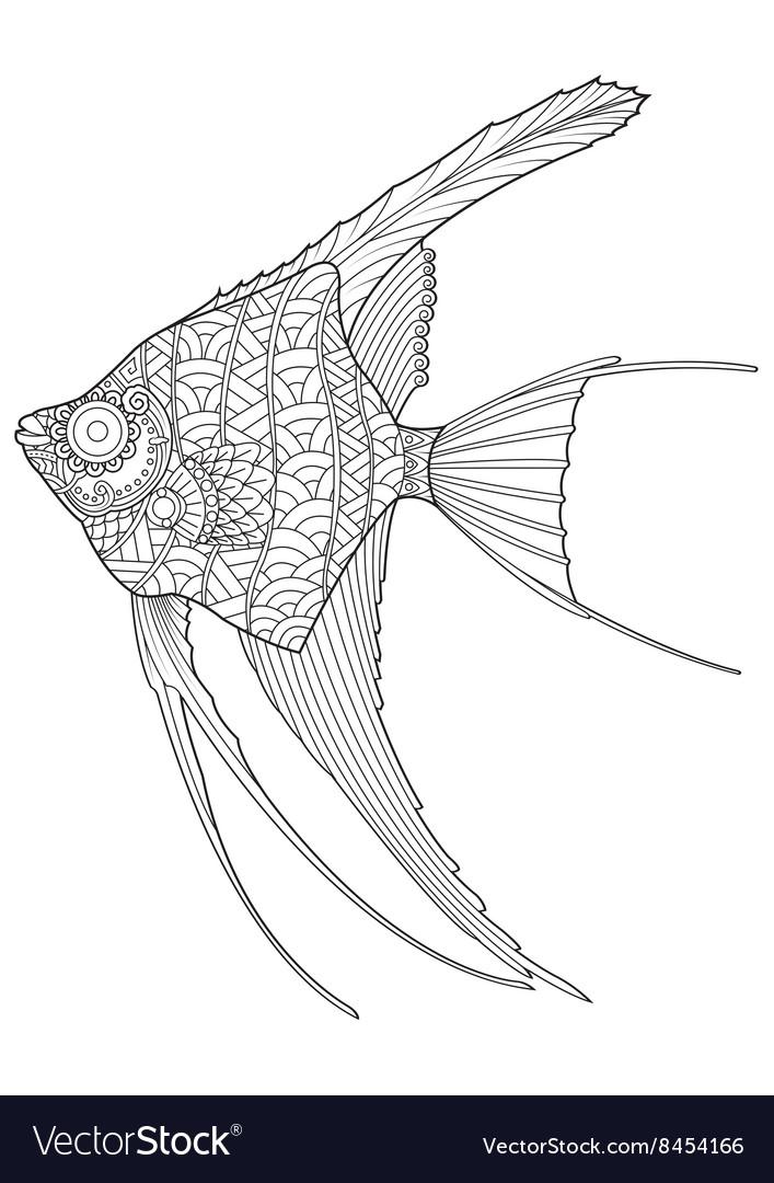 Hand drawn Angel fish coloring page Royalty Free Vector