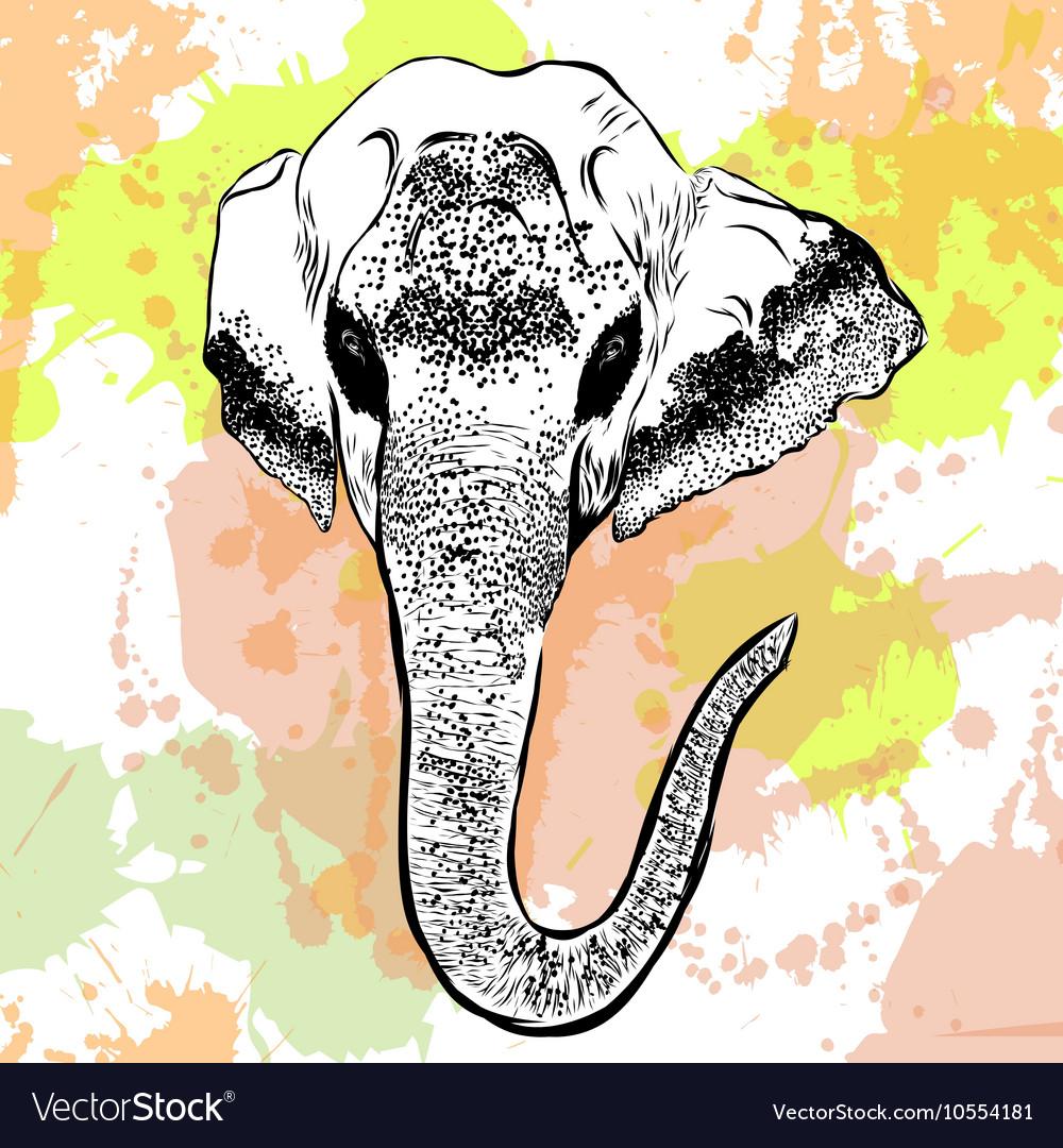 Watercolor elephant portrait on white background