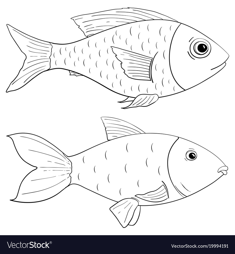 - Fish Outline Drawing Royalty Free Vector Image