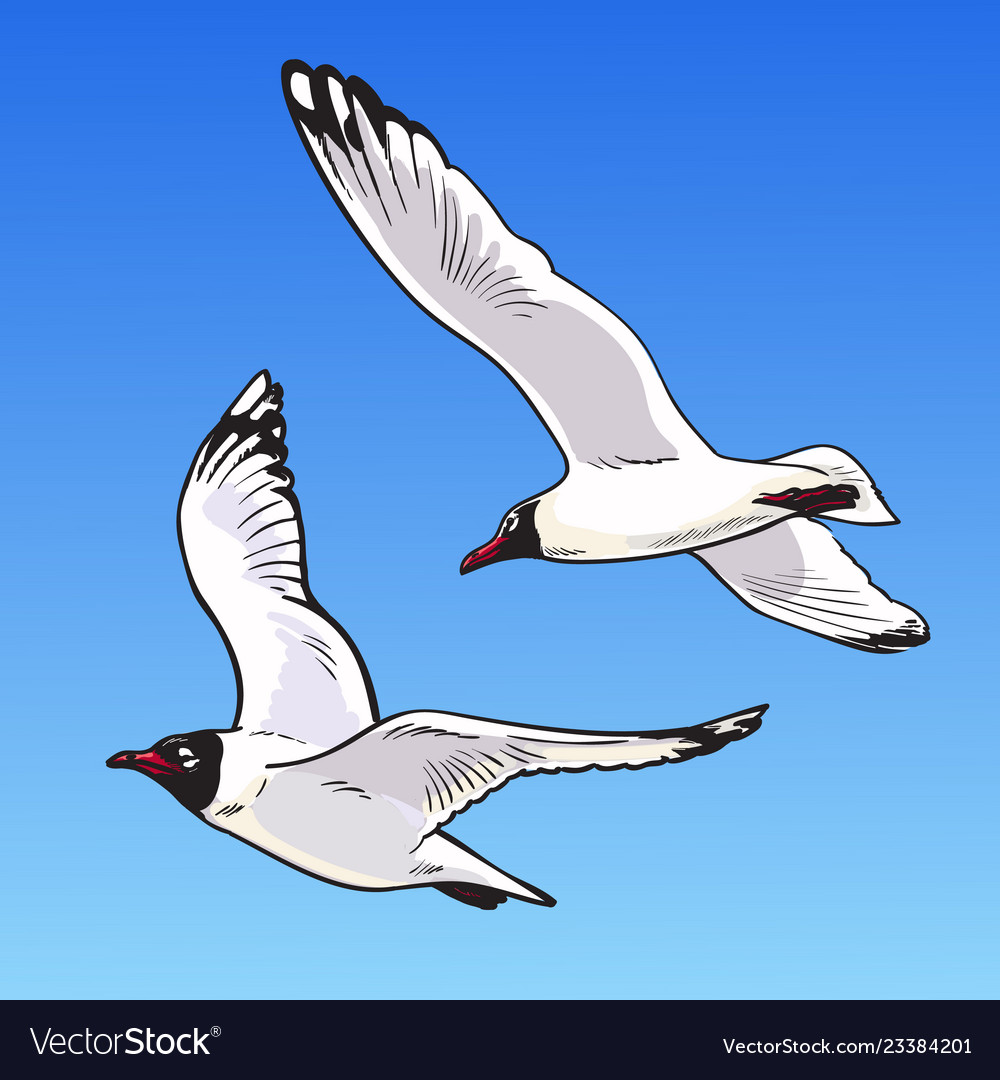 Two cartoon seagulls on a blue background sketch