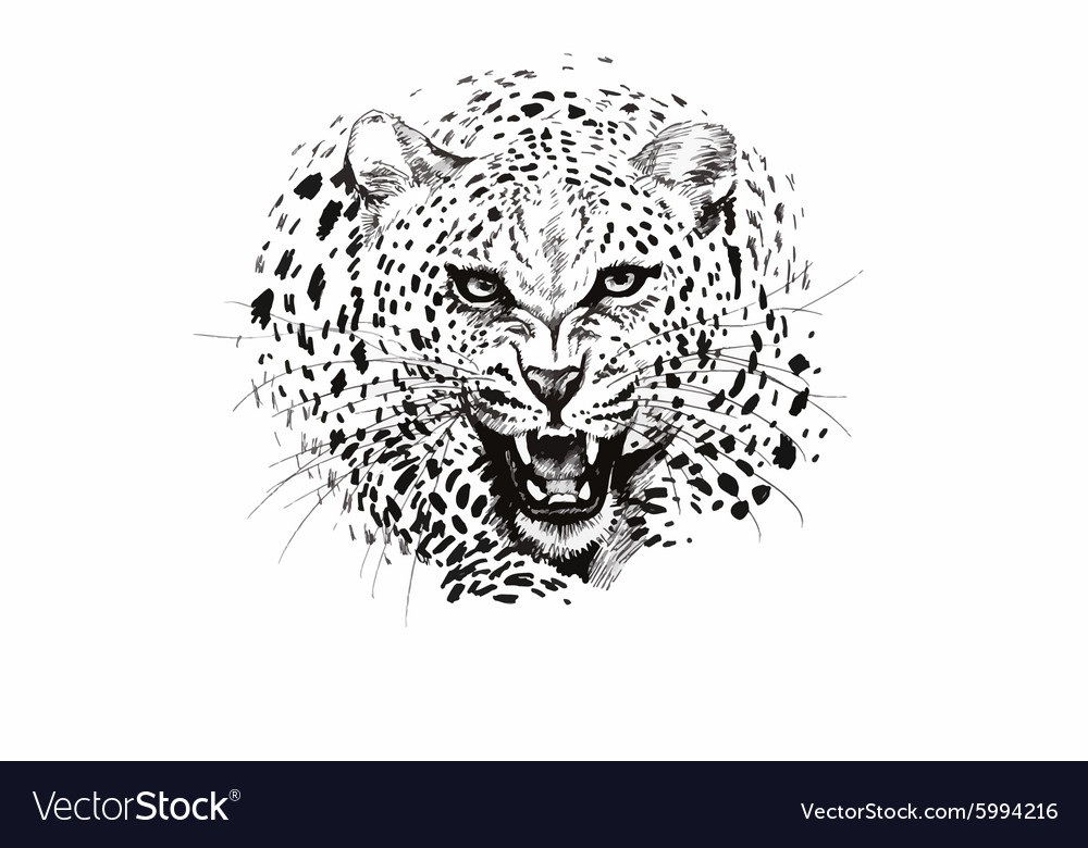 Angry leopard muzzle black and white sketch