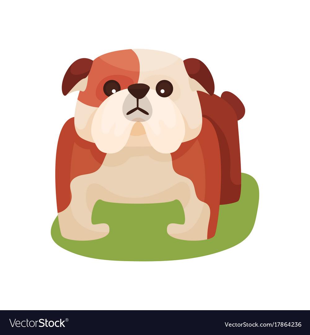 French bulldog dog purebred pet animal standing vector image