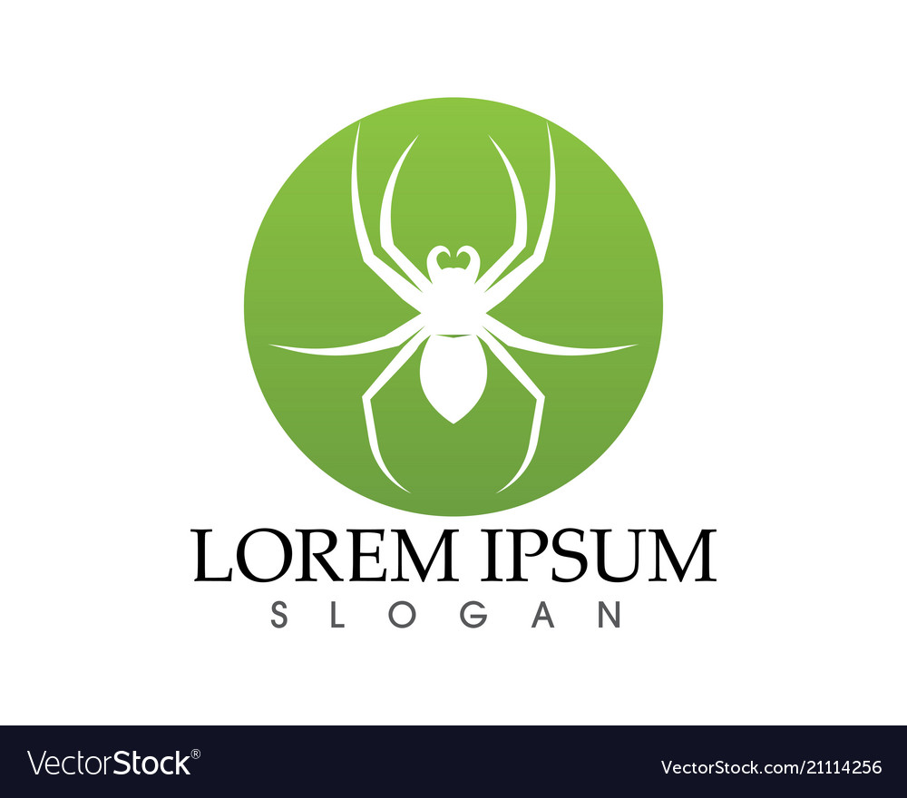 Spider logo and symbols template icons app vector image on VectorStock