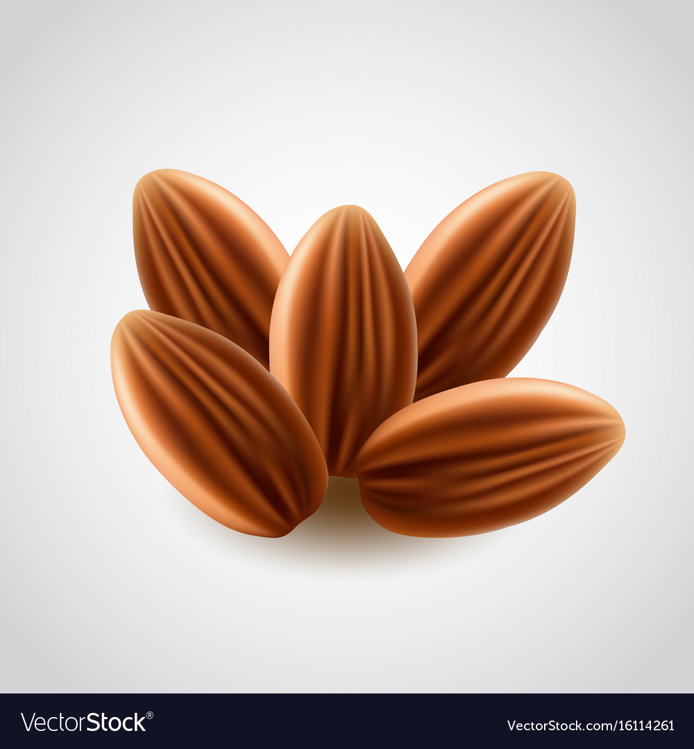 Almonds nuts isolated vector image