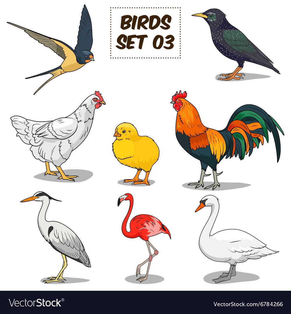 Bird set cartoon colorful