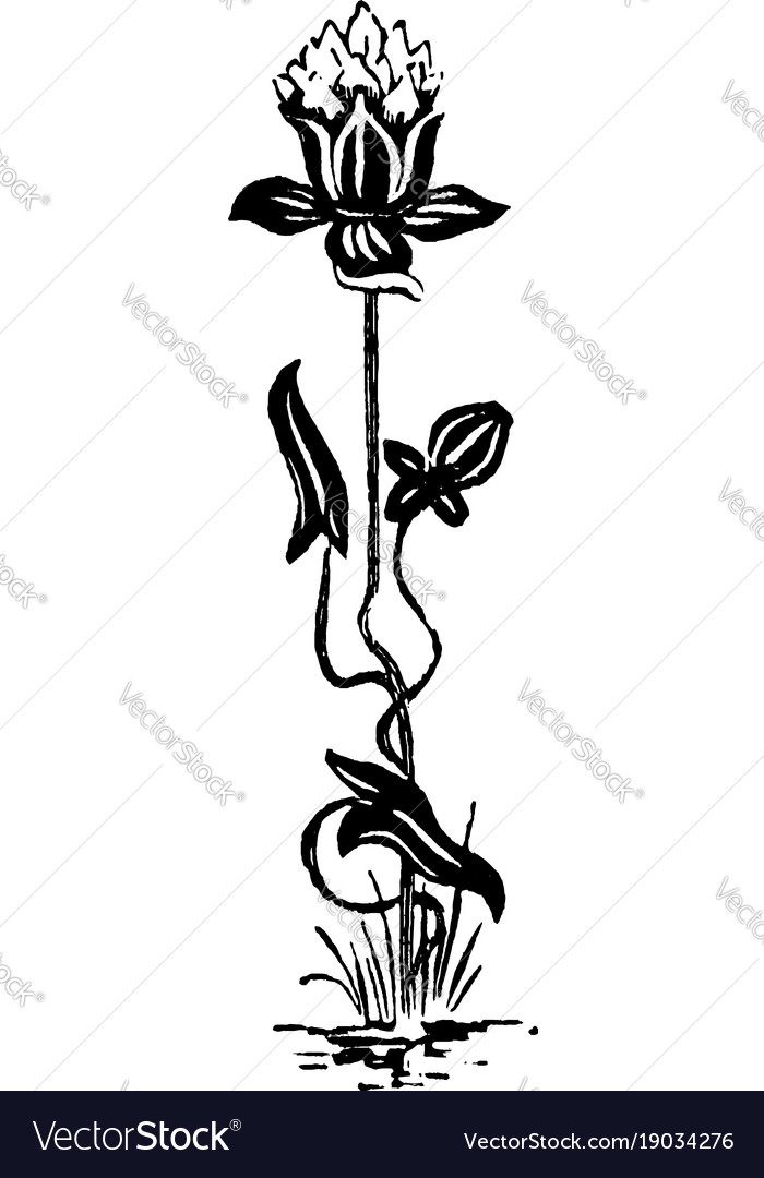 images?q=tbn:ANd9GcQh_l3eQ5xwiPy07kGEXjmjgmBKBRB7H2mRxCGhv1tFWg5c_mWT Cool Art Nouveau Flowers Vector @bookmarkpages.info