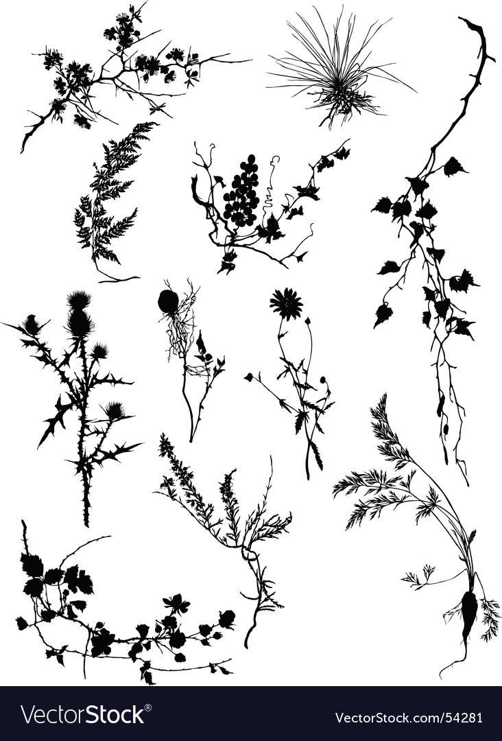 Floral silhouettes