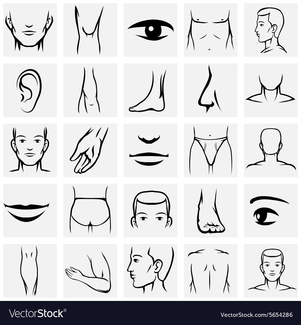 Male body parts icons set vector image